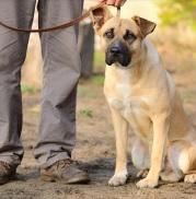 Puppy Behavior 101