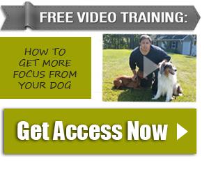 free video cta