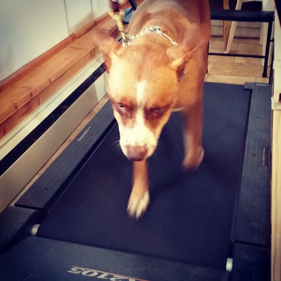 Poughkeepsie Dog Trainer
